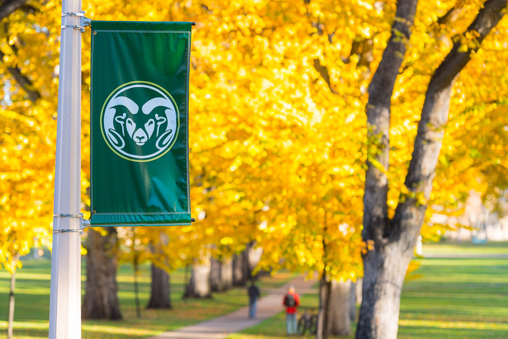 CSU Ram flag on Oval during autumn