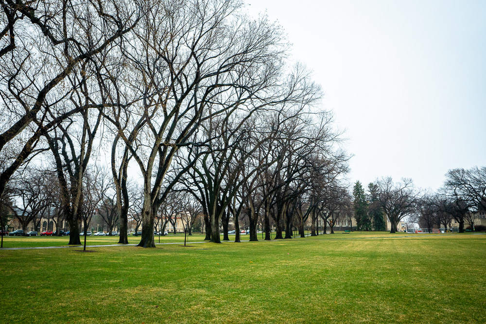 A view of the trees of the Oval at the beginning of winter. The trees have no leaves.