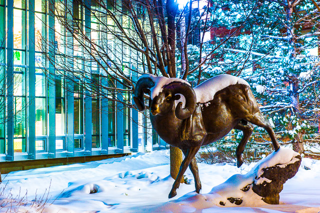 The Cam the Ram statue outside the Library's Cube